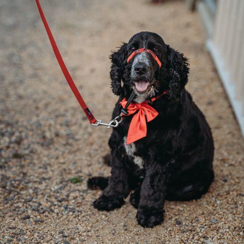 DOG DAY CARE & PET RESORT